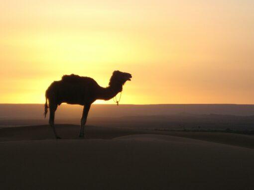 Marrakech Ruta de 3 Días – Un paseo de Sur a Norte
