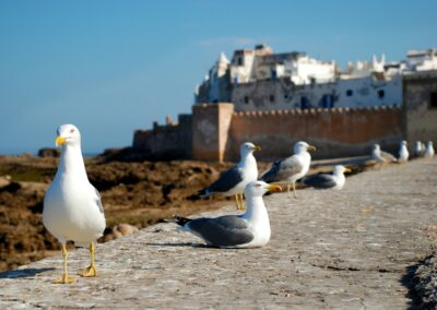 Desde Tanger Ruta de 15 Días – Los Encantos de Marruecos