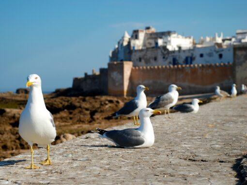 Excursión de 1 Día – La Perla del Atlántico